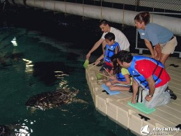 picture of staff feeding turtles at the aquarium