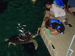 feeding turtles in the Camden Aquarium
